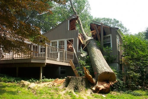 House wrecked by a tree.