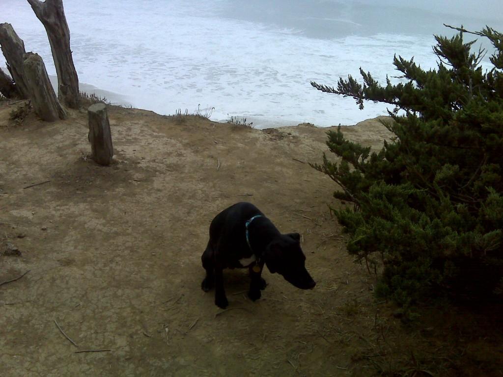 Fe peaking near the cliff's edge